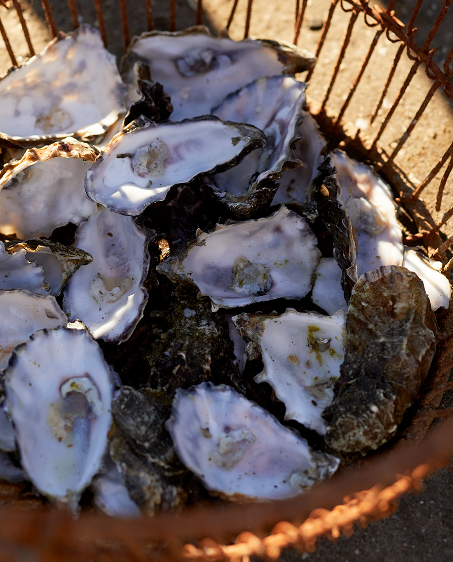 Basket of oyster shells Hog Island Oysters