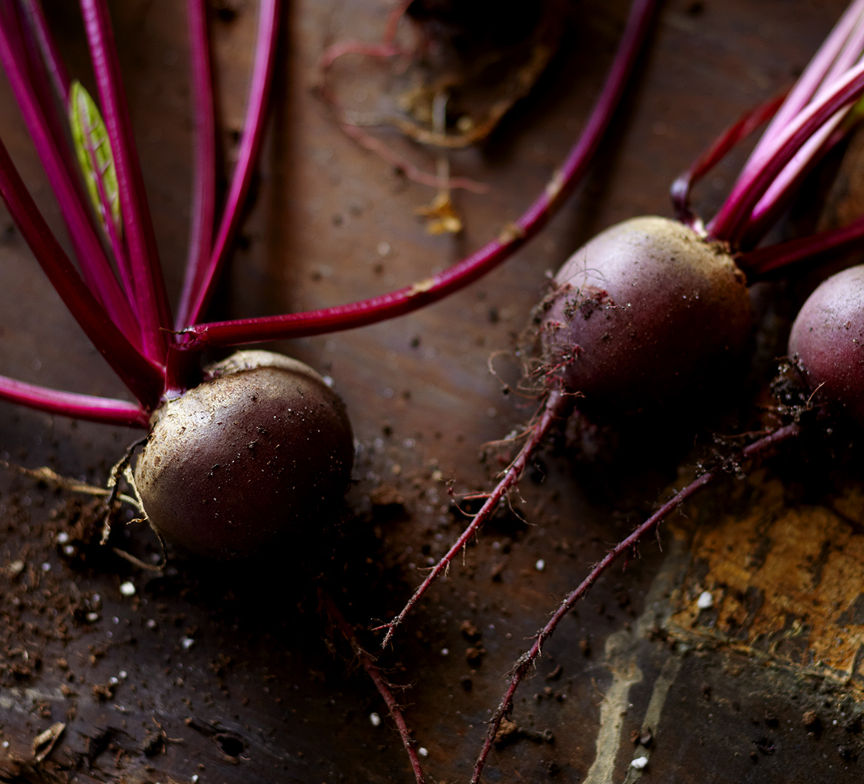 Beets just pulled from the garden